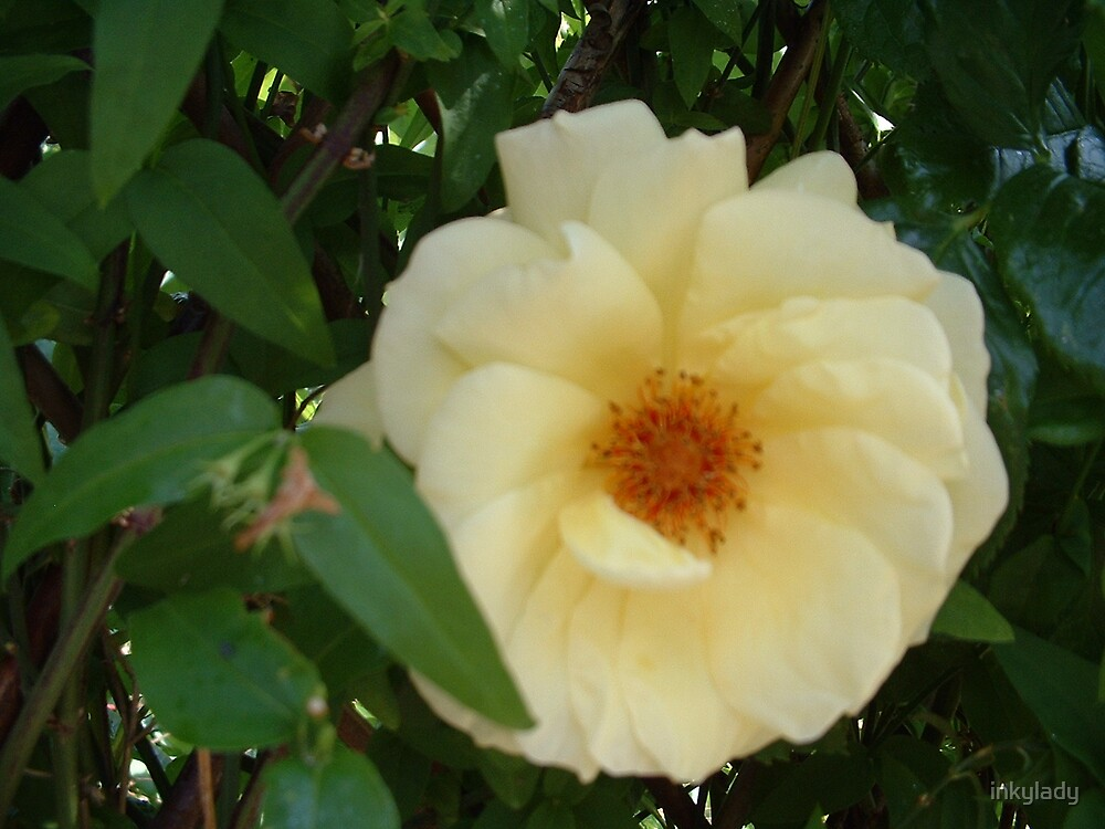 single bloom by inkylady