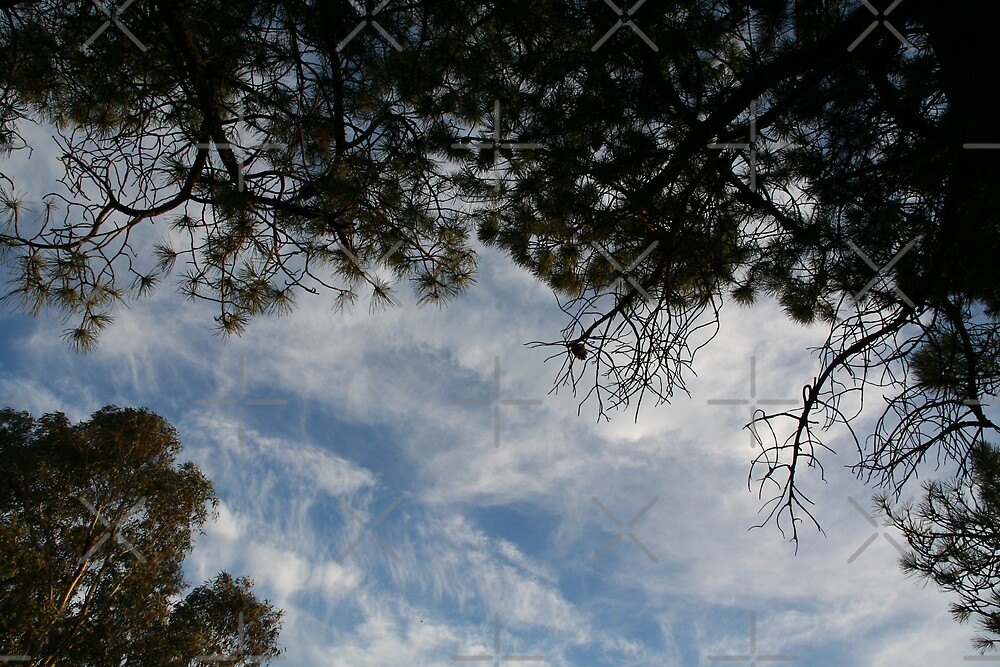 View from a Hammock by Louise Green