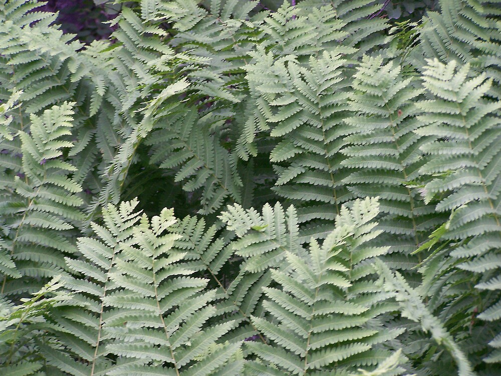 Fern Tips by Gene Cyr
