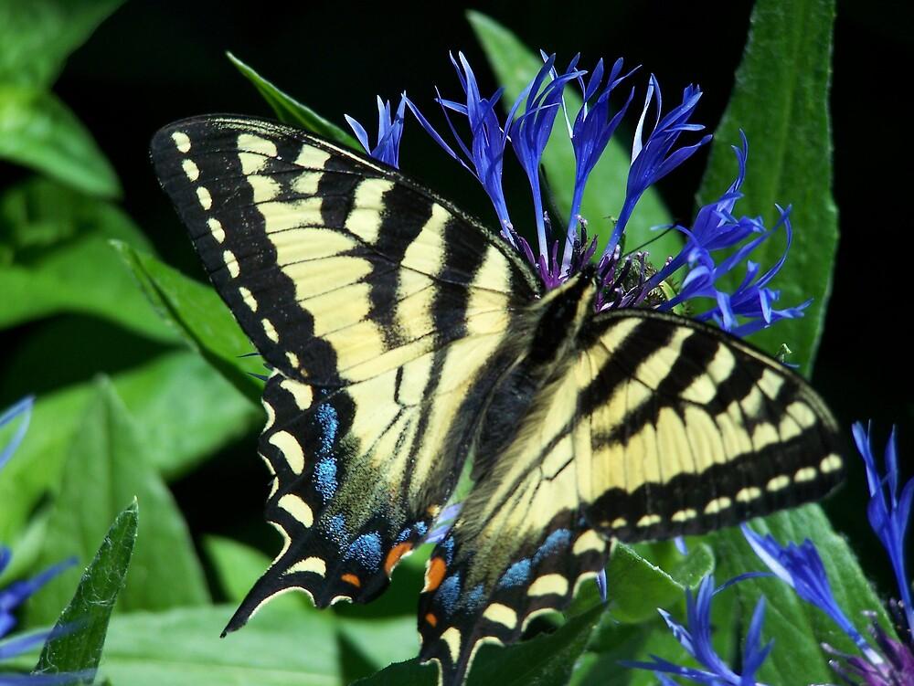 Yellow Monarch by Gene Cyr