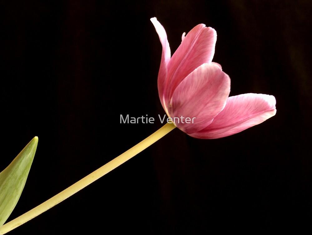 Light Seeker by Martie Venter