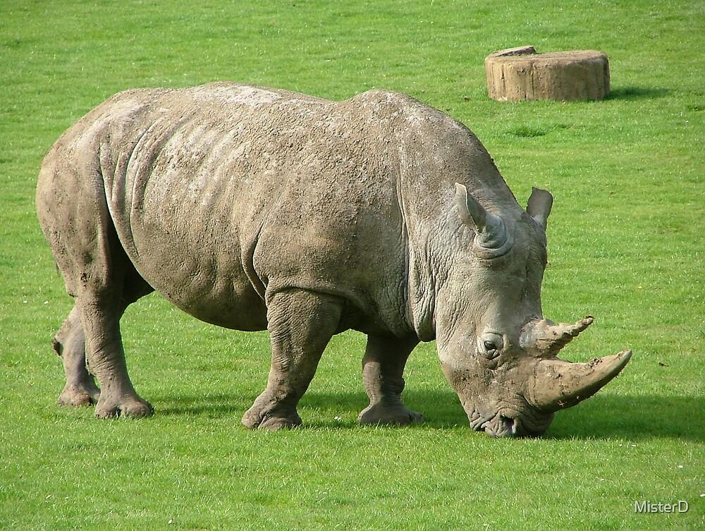 White rhinosceros by MisterD