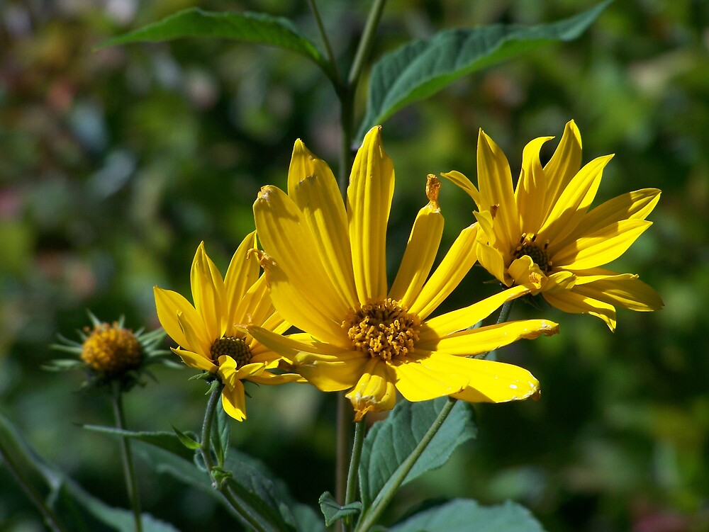 Yellow Wildflowers by Gene Cyr