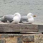 Gulls at rest.........Dorset UK by lynn carter