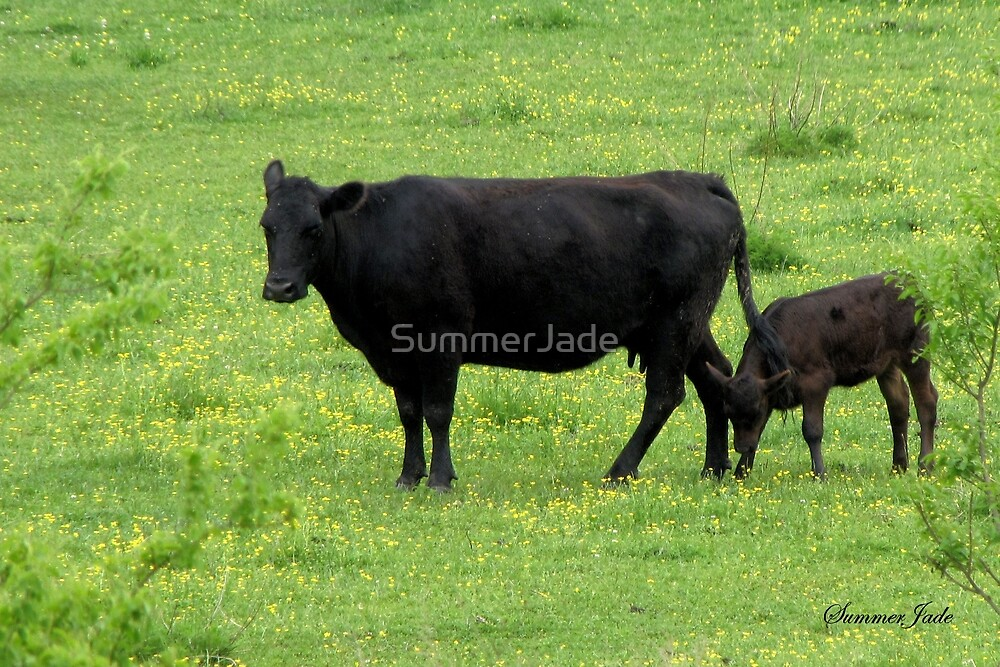Cow and Calf in a Field of Buttercups  by SummerJade