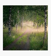 Summer night wit nice and idyllic path Photographic Print