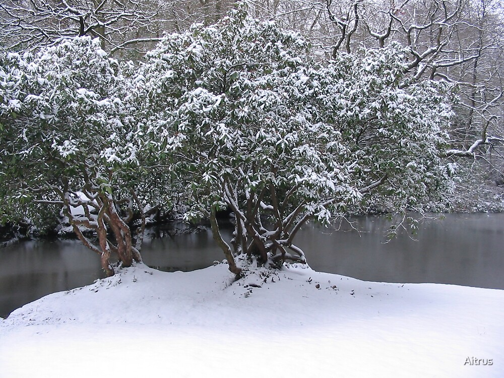 Winter by Aitrus