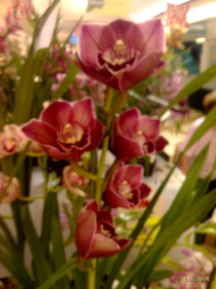 orchids  by louisaeet