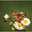 Flower and friend 2 by coopphoto