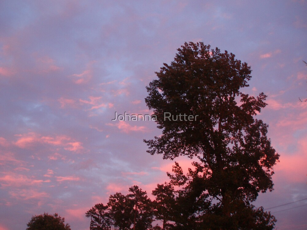 Sunset with tree 1  by Johanna  Rutter