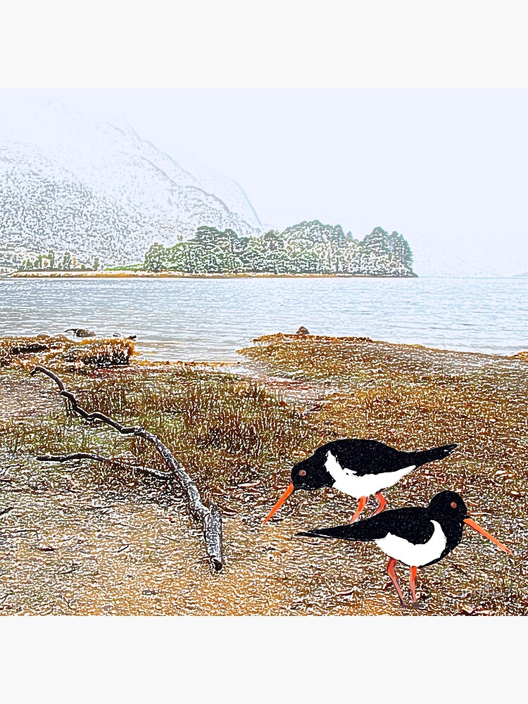 Oyster catchers by anni103