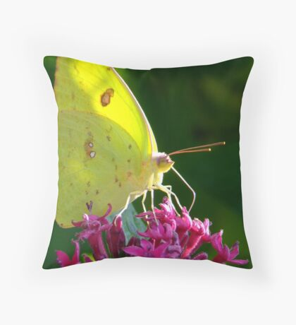Male Cloudless Sulphur Butterfly Throw Pillow