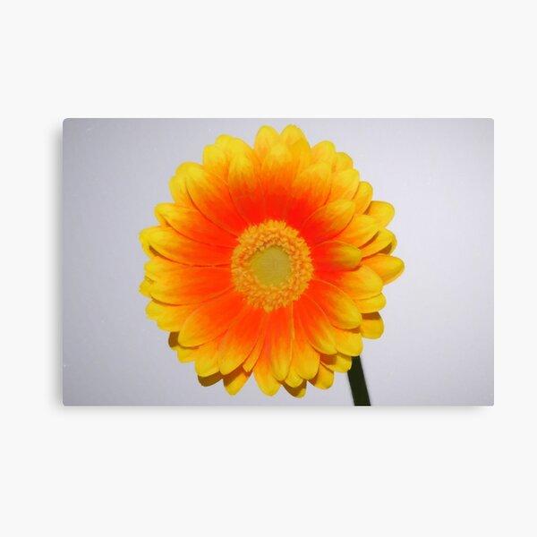 Yellow / Orange Gerbera print Canvas Print