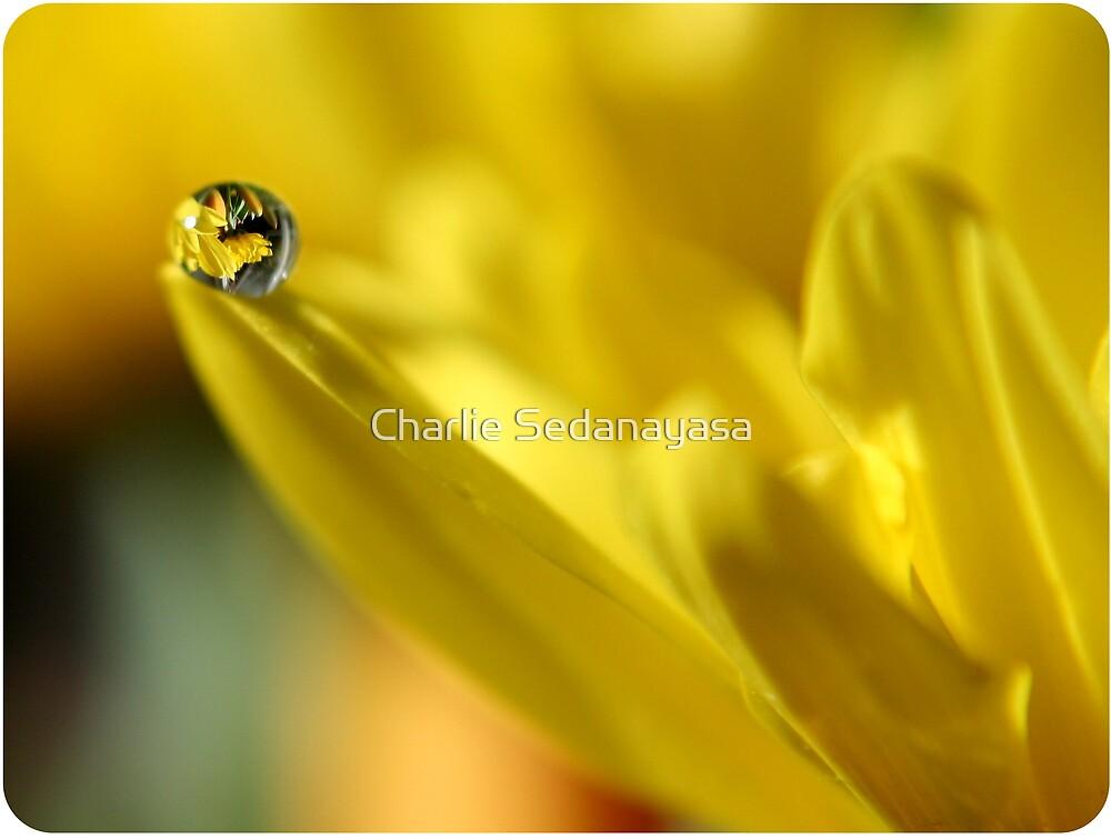 yellow madness by Charlie Sedanayasa