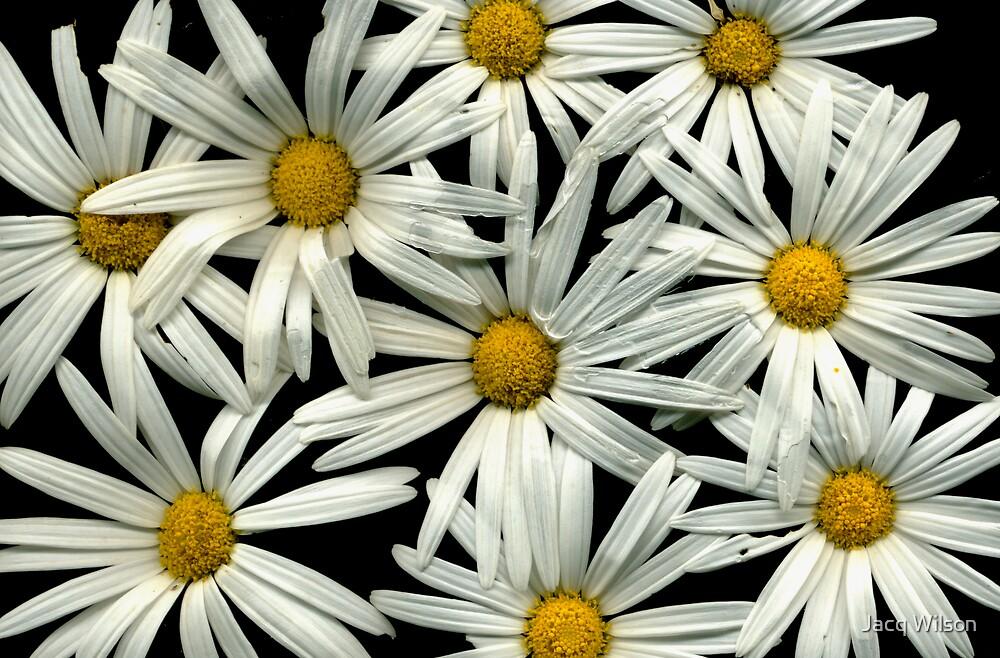 Daisy girl! by Jacq Wilson