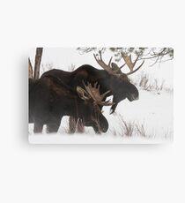 Moose Bros. #2 Metal Print