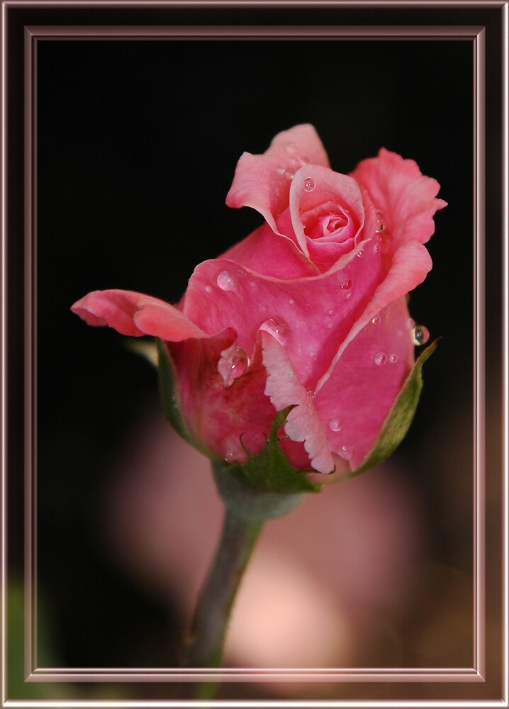 Simply A Rose by dumbomsa
