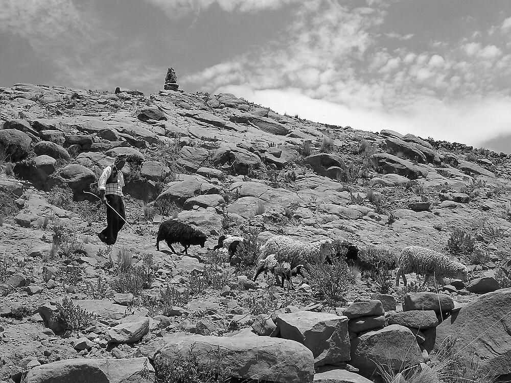 Peruvian Shepherd by ioandavies