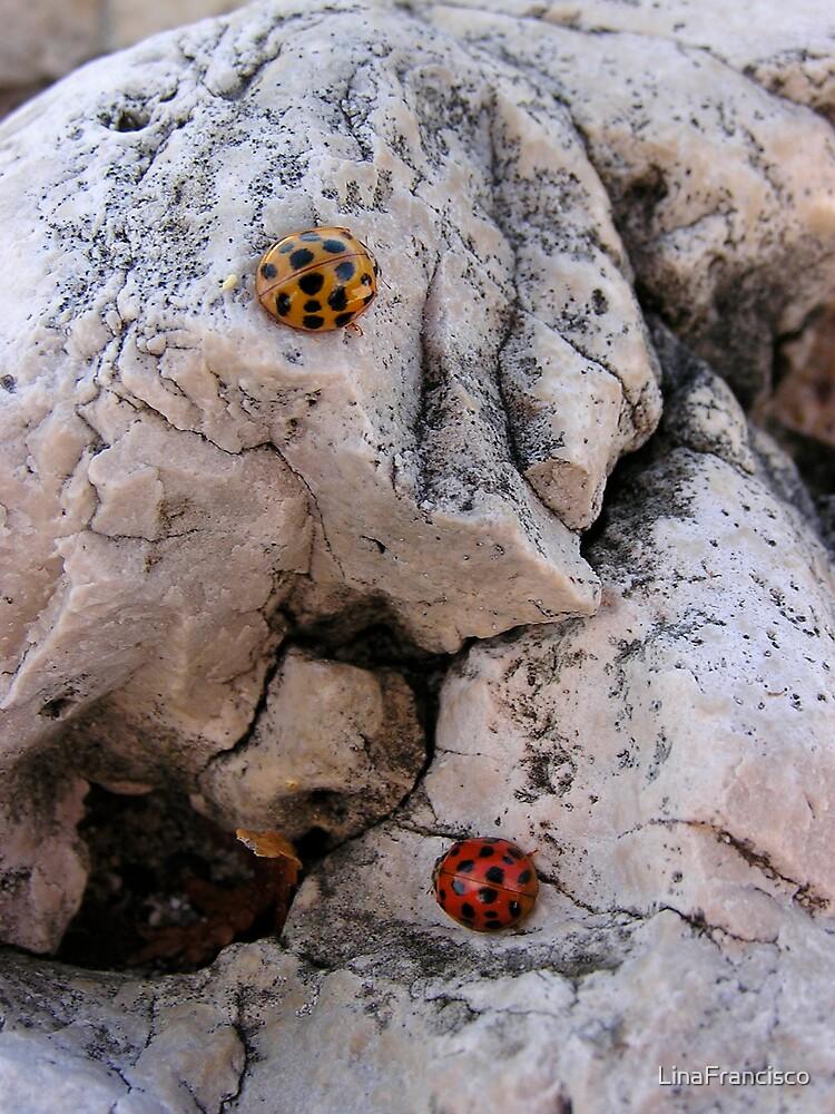 Ladybugs by LinaFrancisco