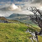 Ingleborough from Twistleton Scar, Yorkshire Dales by Stephen Liptrot