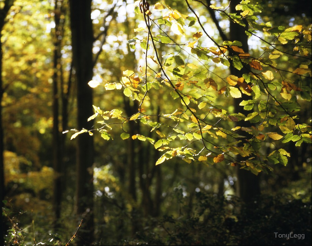 Autumn afternoon light ... by TonyLegg