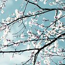 spring blossoms by Ingrid Beddoes