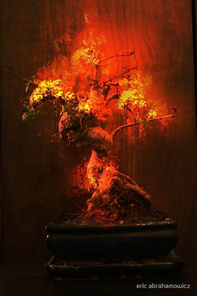 God's bonsai tree by eric abrahamowicz