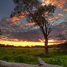 Sunset over log by Joel McDonald
