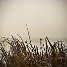 More Fog by Michael Mancini
