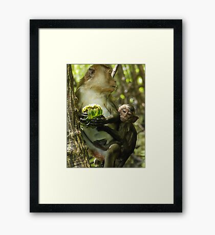 Long Tailed Macaque. Framed Print