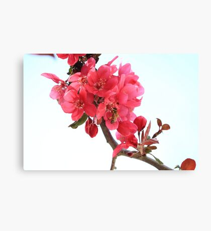 Ah The Beautiful Smell Canvas Print