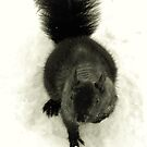 Black Squirrel in Snow by RLHall
