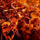 Autumn Colors by Danita Hickson