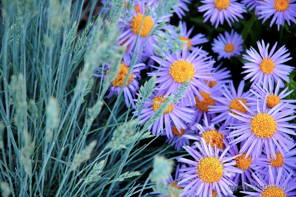 sage and asters by Christine McDonough