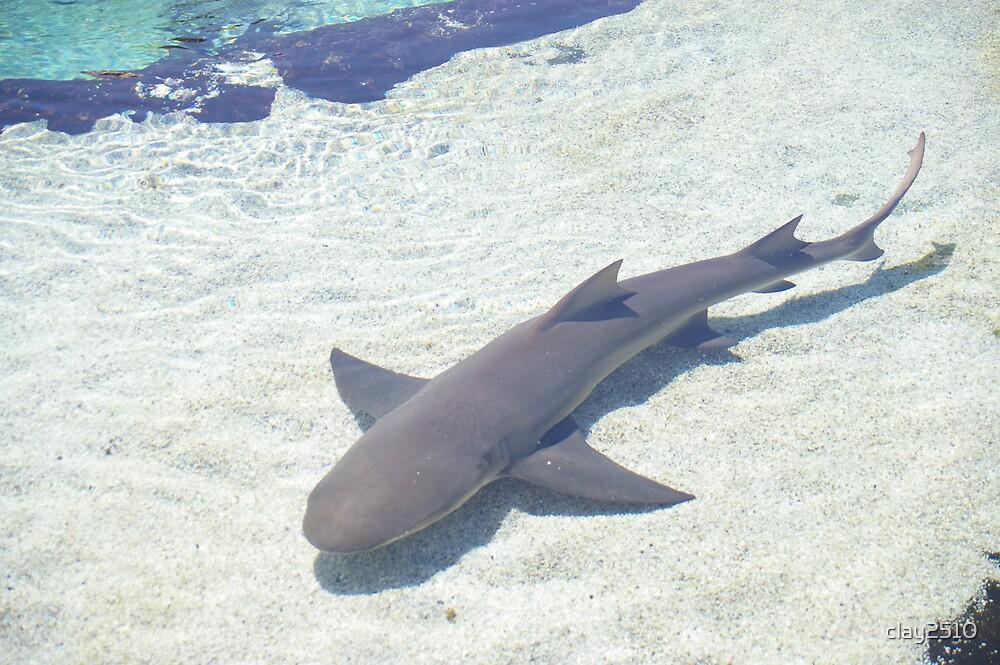 Shark by clay2510