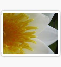 White Water Lily Flower Macro Sticker