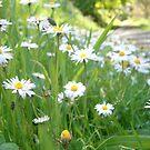 Wildflowers by Judi Rustage