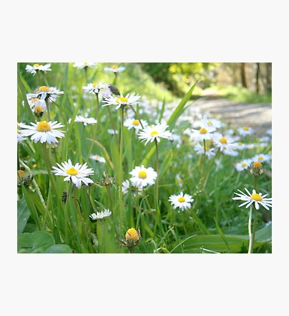 Wildflowers Photographic Print