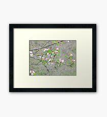 you feel like spring..2500 visualizz.dicembre 2014-.VETRINA RB EXPLORE 27 GENNAIO 2013 - Framed Print