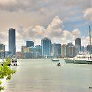 Miami in View by photorolandi