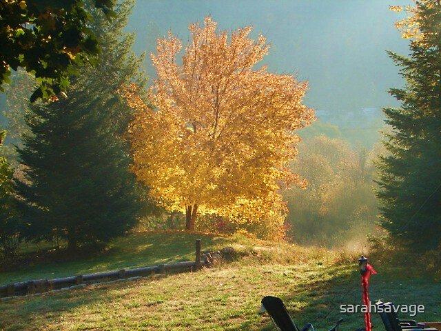 Autumn at Wolf Lodge by sarahsavage