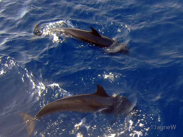 two dolphins by JayneW