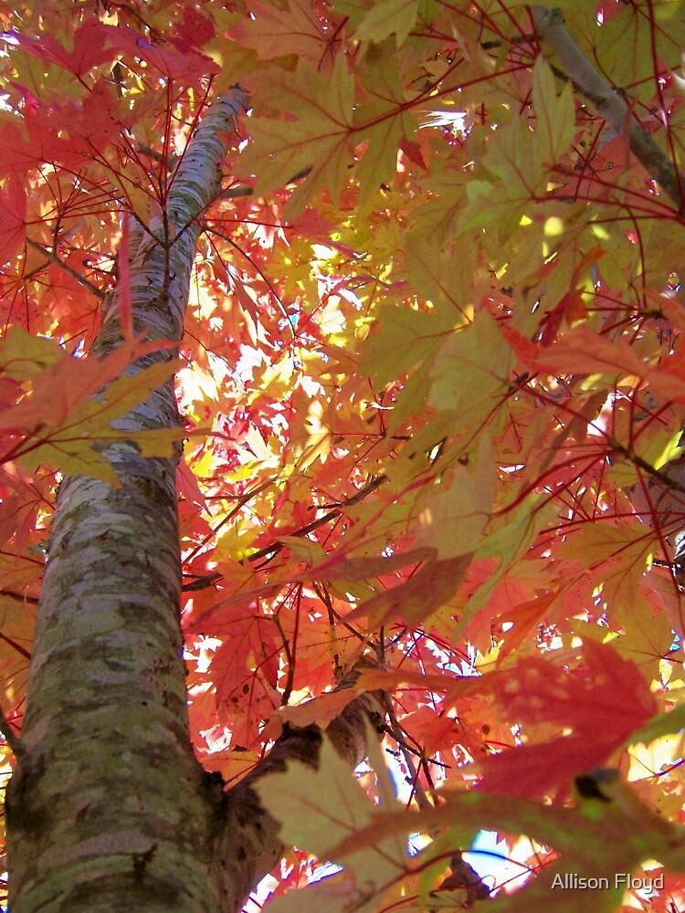 Climbing Tree by Allison Floyd