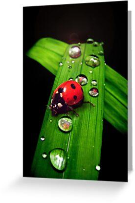 Ladybird by Kitsmumma