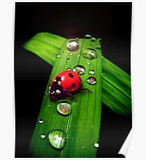 Ladybird Poster