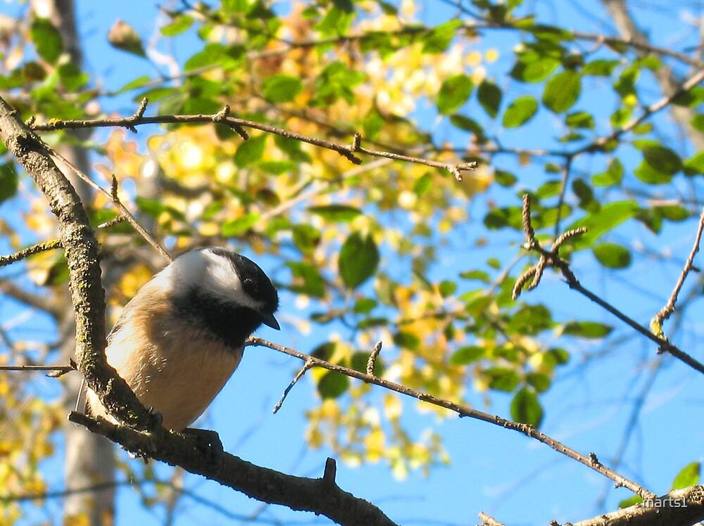 Here birdie 3 by marts1