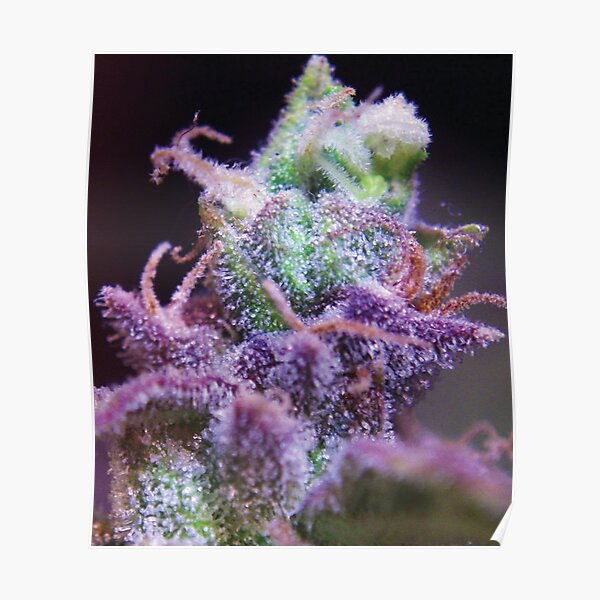 Trichome 15 Poster