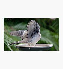 Dove wings 6699 Photographic Print