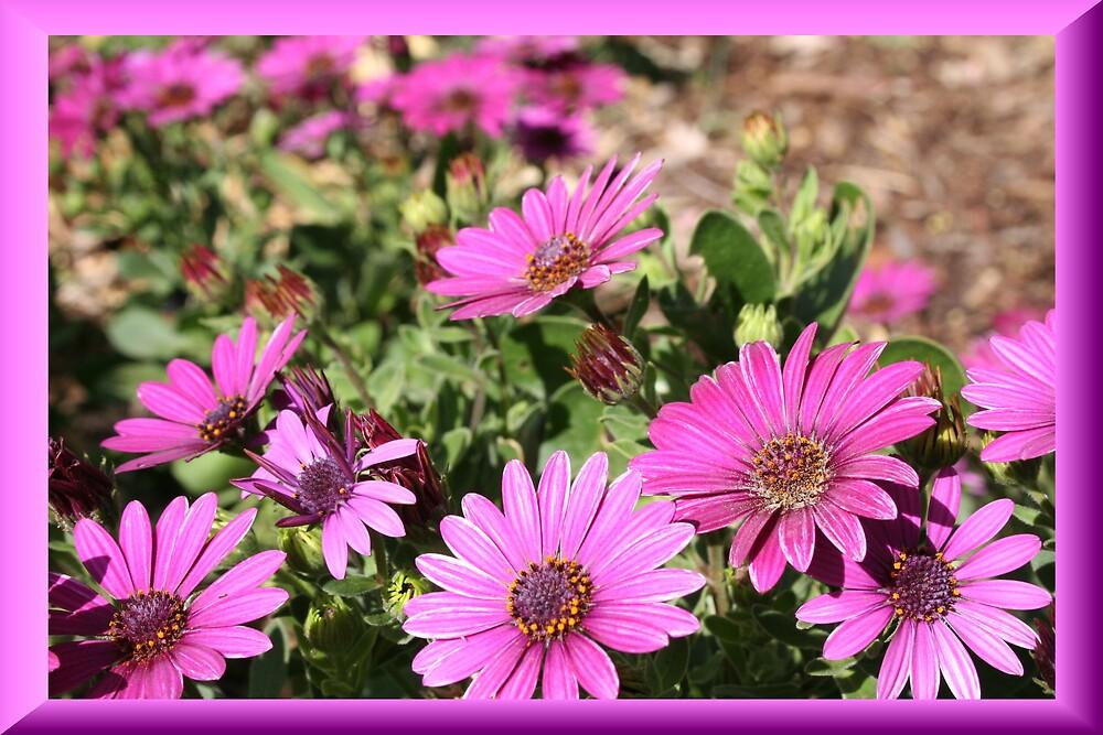 flowers by sherryn pitt