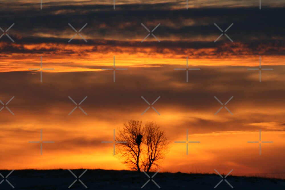 Sunset by Angela E.L. Clements